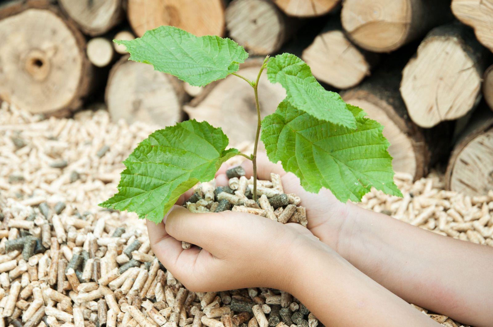 Biomasa: kotlovi na pelet, peći na drva